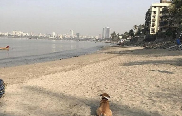 The Mahim Beach Cleanup In Mumbai Cleared About 700 Tons Of Plastic