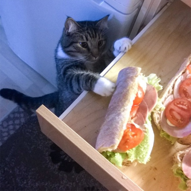 Cats Stealing Things. Mostly Food