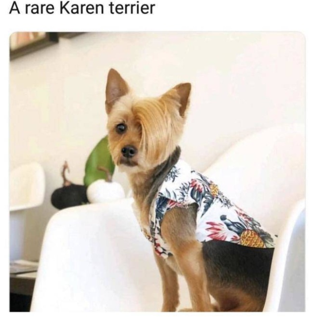 Oh No Karen, Not You Again