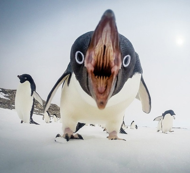 Bird Mouths Look Scary