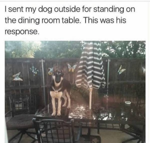 Funny Dog Memes, part 2