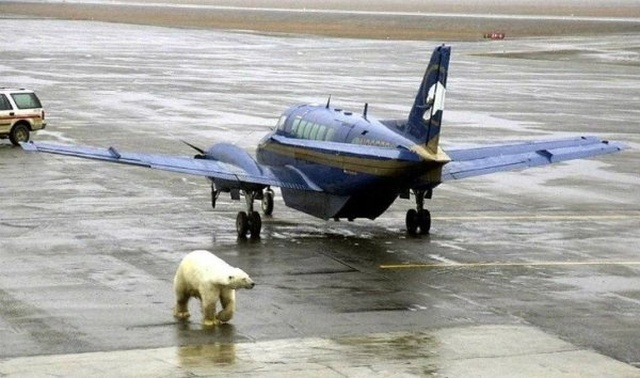 Strange Things At The Airports And Planes