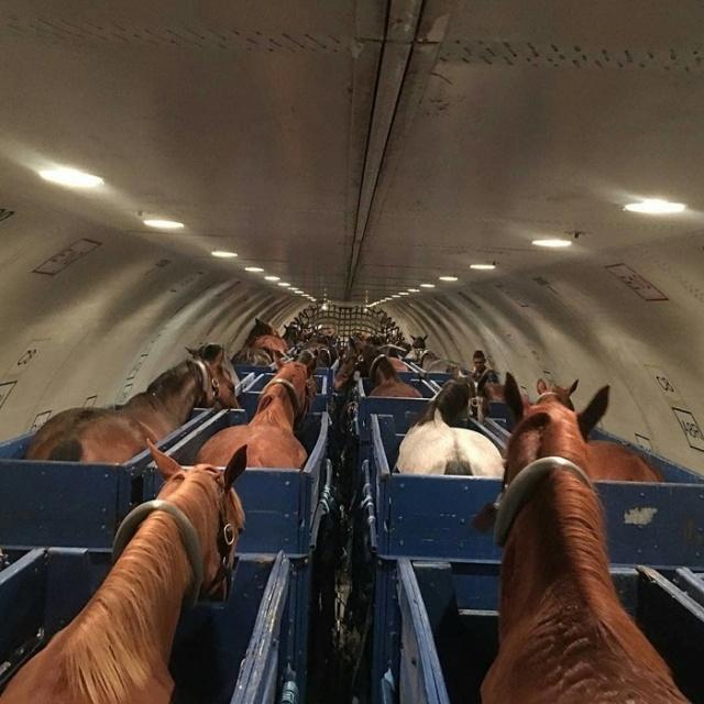 How Horses Fly