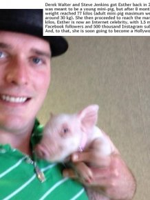 In 2012, Two Guys Got A Mini-Pig...