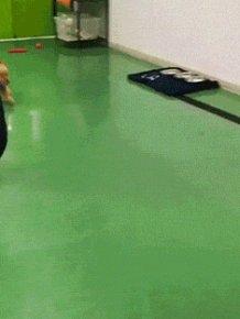 When Animals Get Zoomies