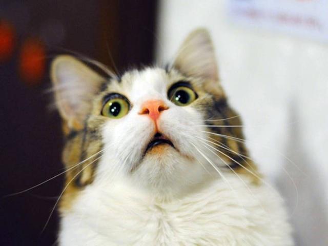 Funny Cats, part 7