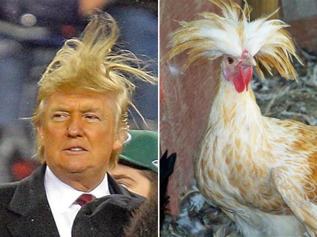 Things That Look Like Trump