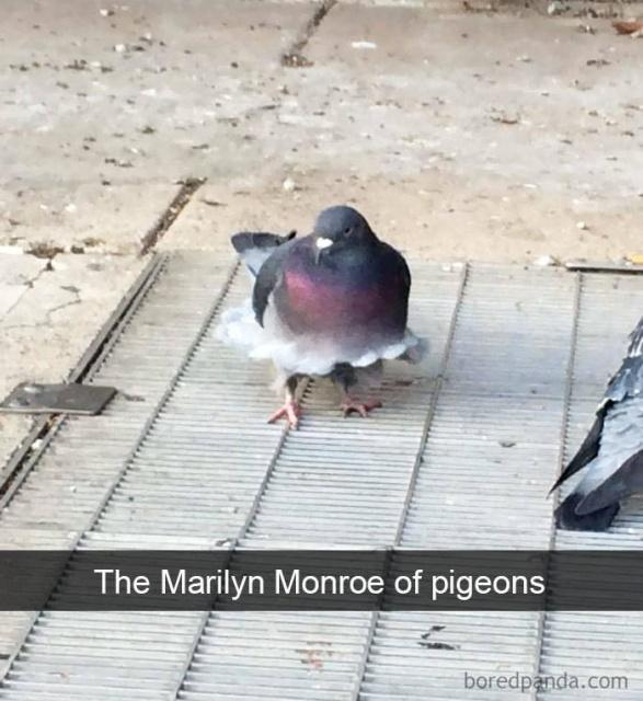 Birds On Snapchat