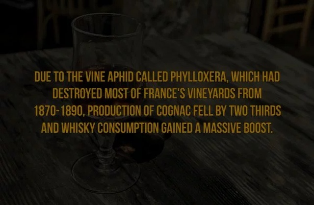 Scotch Facts