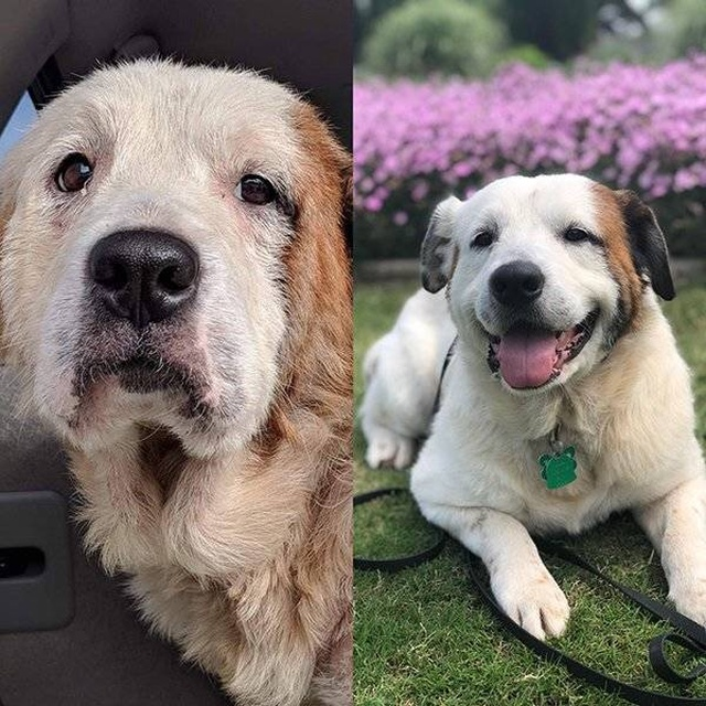 Animals Before And After The Adoption, part 2