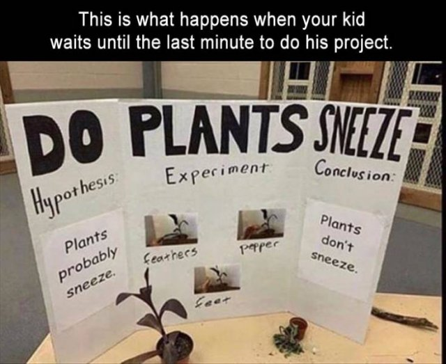 Funny Pictures To Make Your Day A Little Bit Better