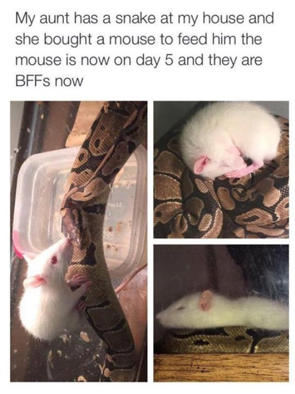 Snakes Can Be Friends