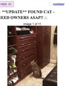 Guy Saved A Cat And Wanted To Return It To Its Owners. But It Was Not A Normal Cat
