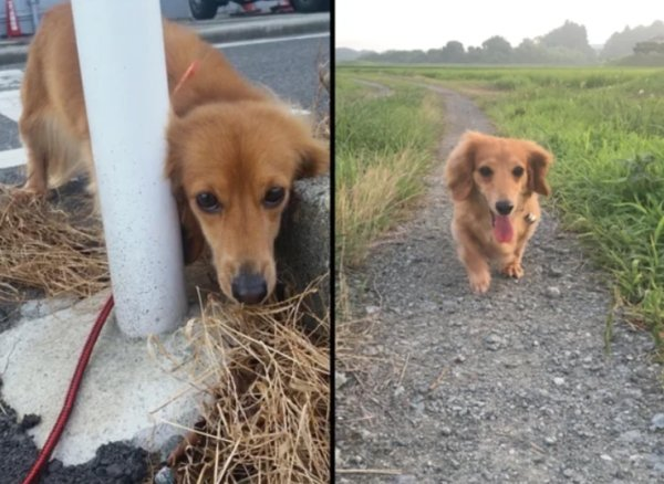 Pets Before And After Adoption