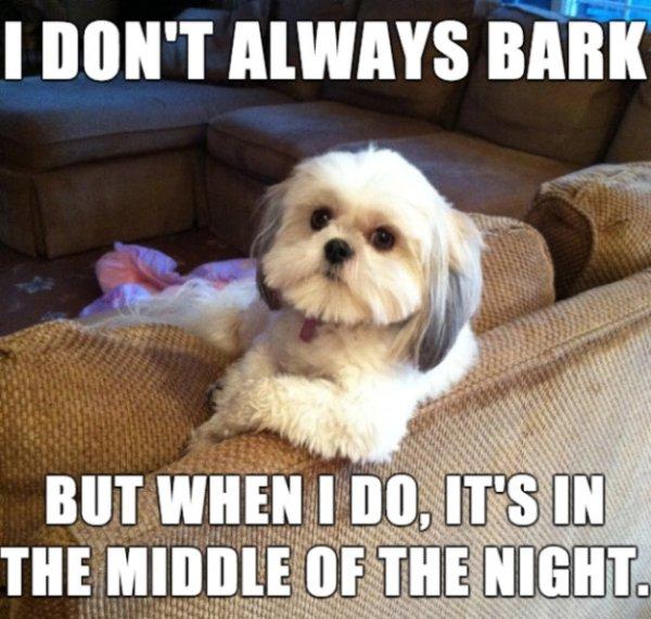 Dog Memes, part 3