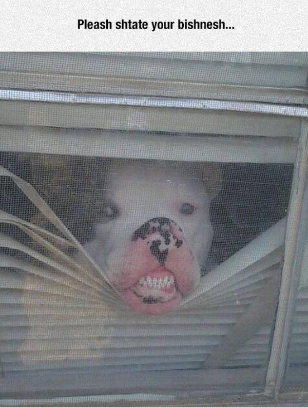 Animals Vs. Glass