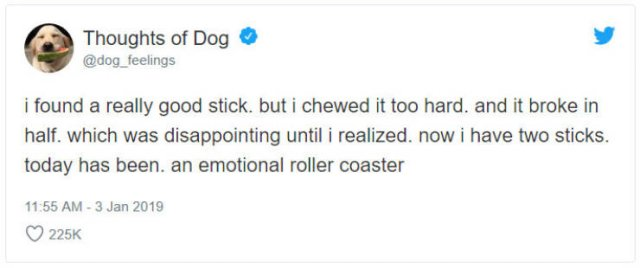 What If We Could Read What Dogs Think