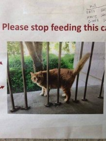 In California, Physics Students Using Graphs Asked Not To Overfeed A Cat