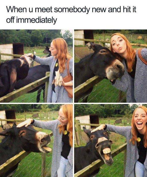 Funny Animals, part 58