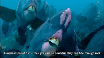 Fish Are Freaky