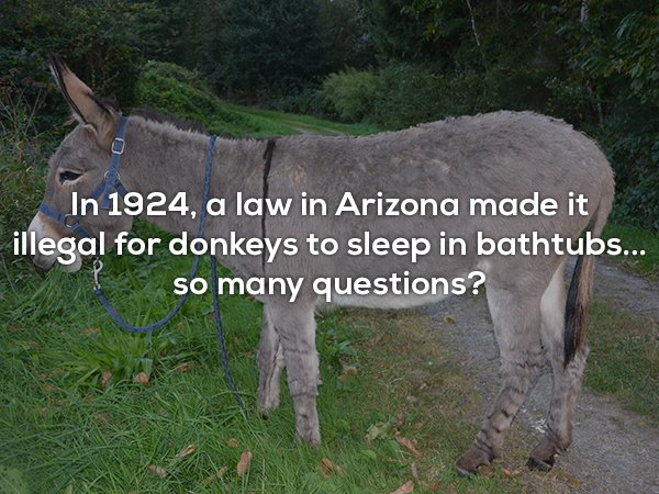 Interesting Facts, part 69