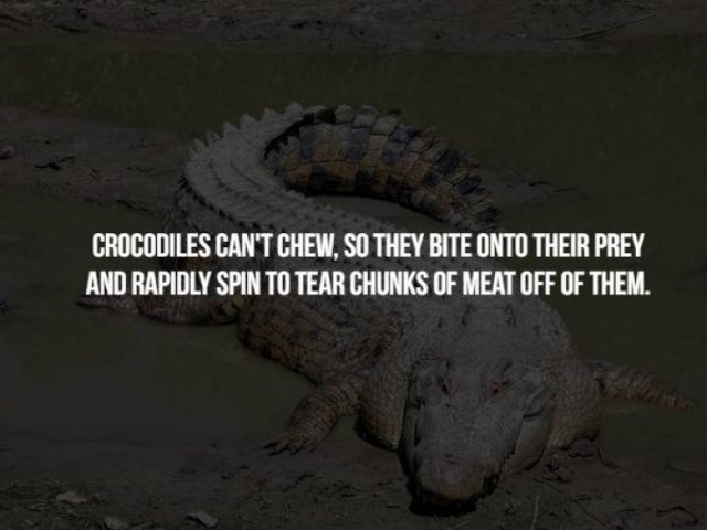 Scary Animal Facts