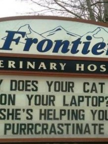 Cat Jokes By Vet Clinics