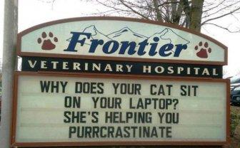 Cat Jokes By Vet Clinics