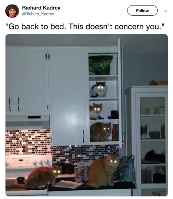 Funny Cats, part 8