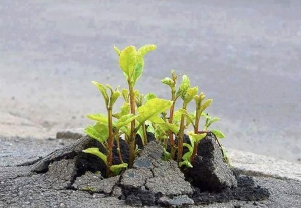 Plants Can Grow Anywhere