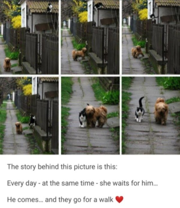 Funny Dogs, part 5