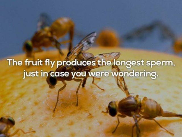 Unbelievable Facts, part 8