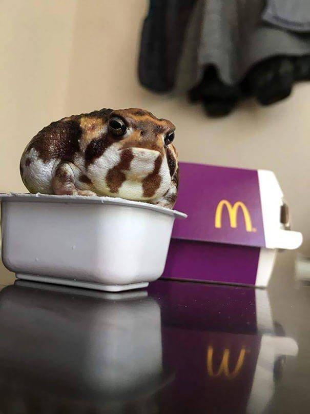 Don't Eat It Please