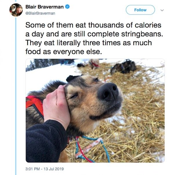 Sled Dogs Have A Lot To Teach About Body Positivity