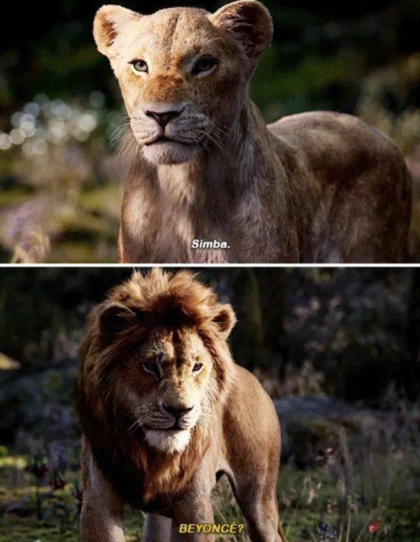 Lion King Memes