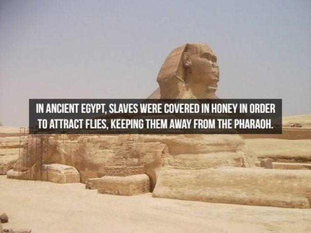 Historical Facts, part 3