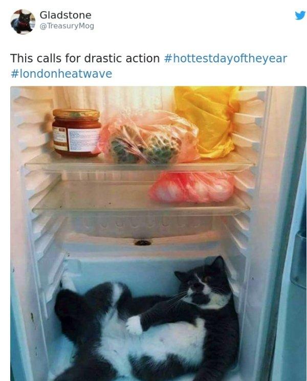 Heatwave Makes People Creative