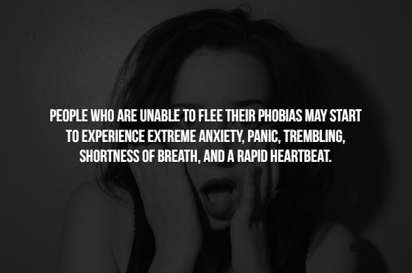 Facts About Phobias