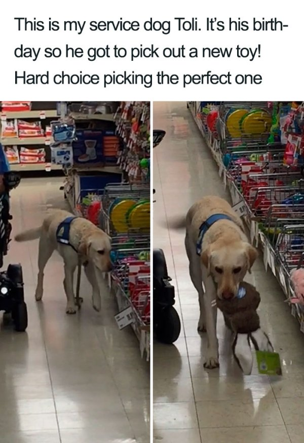 Dogs Are Amazing Creatures