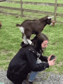 Parkour Goats