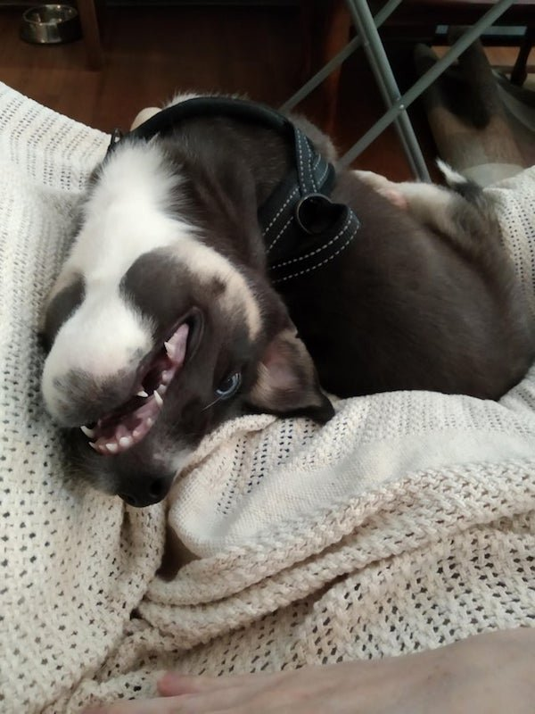 Funny Dogs, part 6
