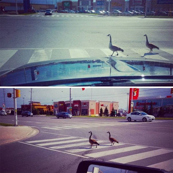 You Know You In Canada When You See Something Like This