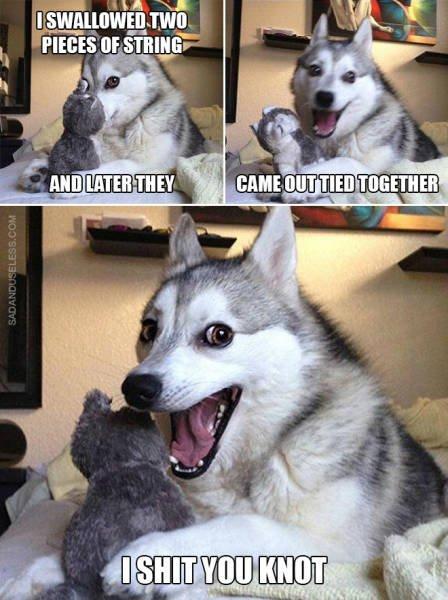 Dog Puns