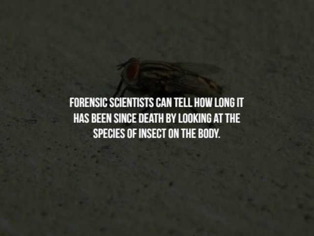 Creepy Facts, part 15