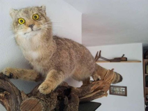 Funny Bad Taxidermy