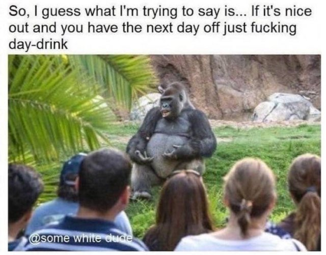 You Have To See These Alcohol Memes Before The Weekend