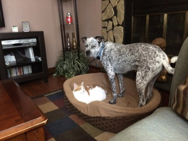 Cats Stealing Dog Beds