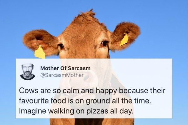 Funny Tweets, part 18