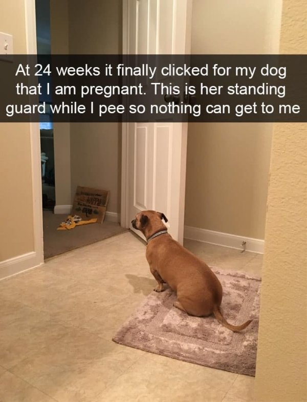 Dogs of Snapchat