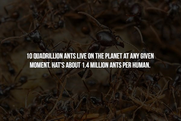 Creepy Facts About Insects